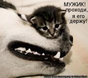 http://thumbnails23.imagebam.com/10262/4514c3102617420.jpg