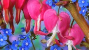 Flowers and Gardens HQ wallpapers Collection 1 B92e73108223736