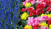 Flowers and Gardens HQ wallpapers Collection 1 F17d26108223924